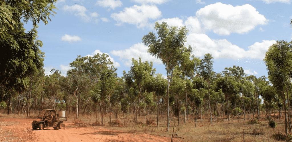 Alcheringa-Plantation-slide Work experience